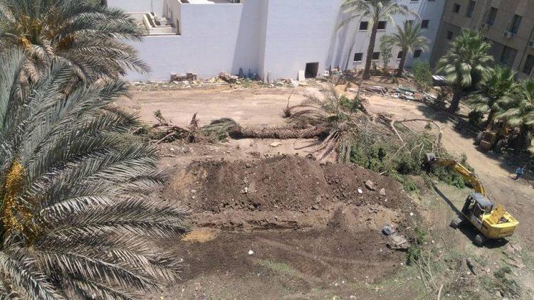 القاهرة..كمدينة تكره الأشجار